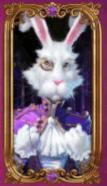white rabbit gratisspinn